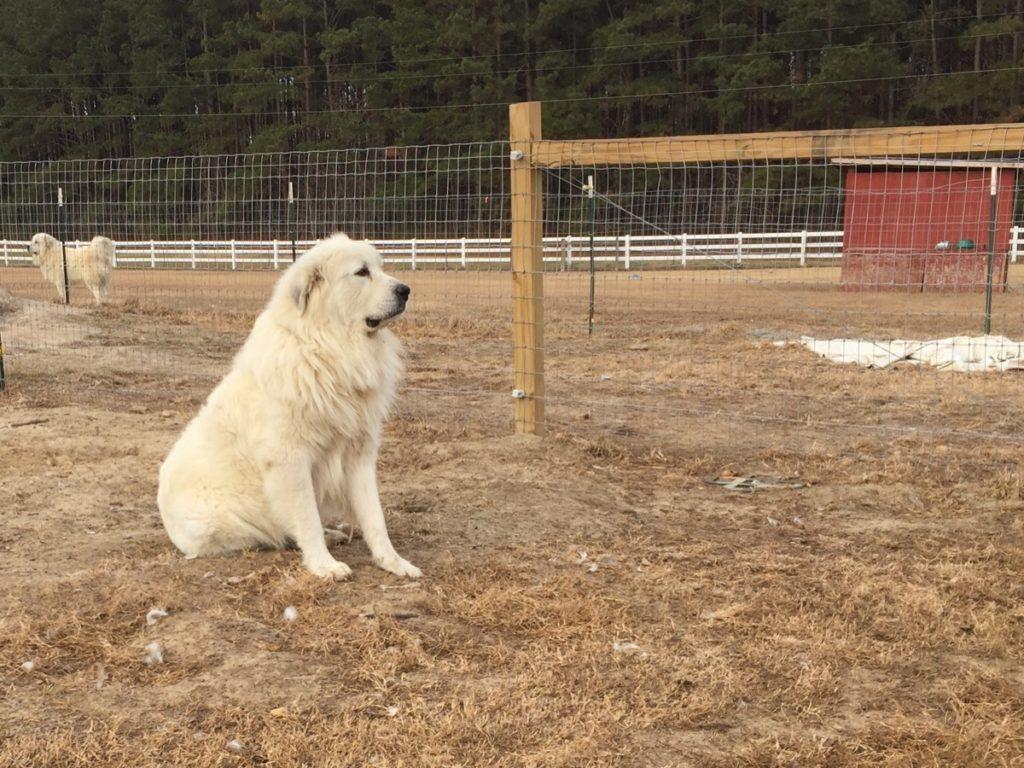 Rocky Of Twin Oaks Farm WS490818
