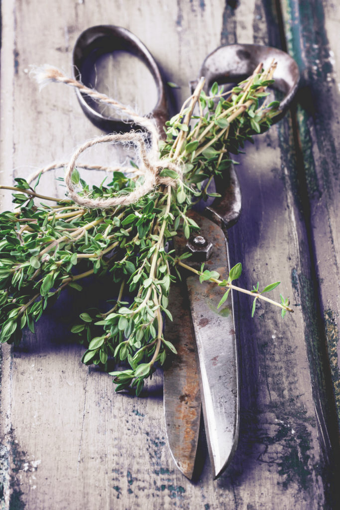 Thyme and rustic scissors